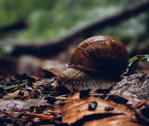 Preview wallpaper snail, shell, leaves, macro