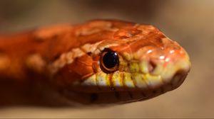 Preview wallpaper snake, boa, reptile, eyes