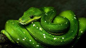 Preview wallpaper snake, green, reptile, wildlife