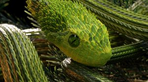 Preview wallpaper snake, green, reptile, scales, 3d