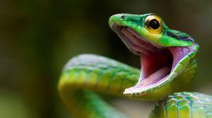 Preview wallpaper snake, green snake, costa rica