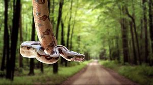 Preview wallpaper snake, road, grass, trees, blurred
