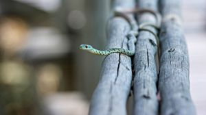 Preview wallpaper snake, small, timber, crawl