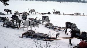 Preview wallpaper snow, deer, sledge, team, transport, north pole