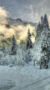 Preview wallpaper snow, fog, clouds, hills, winter, forest, spruce