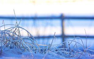 Preview wallpaper snow, frozen, grass, ice, winter