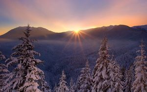 Preview wallpaper snow, nature, frost, trees, sunset, lesogor, beautiful, winter