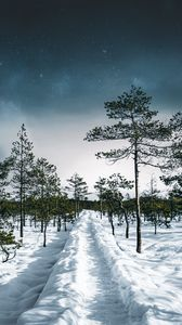 Preview wallpaper snow, path, trees, forest, sky, winter
