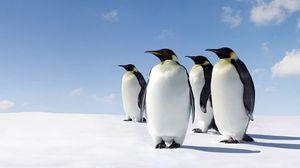 Preview wallpaper snow, penguins, walk
