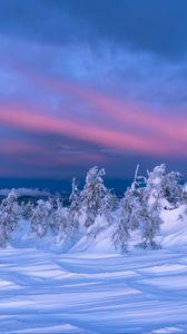 Preview wallpaper snow, trees, dusk, winter, landscape