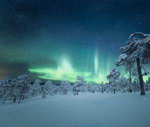 Preview wallpaper snow, trees, northern lights, night, winter