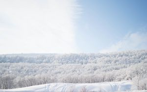 Preview wallpaper snow, trees, sky