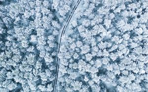Preview wallpaper snow, winter, aerial view, forest, trees