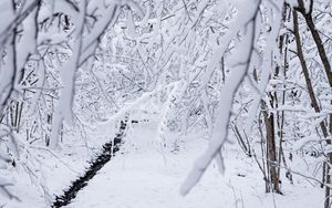 Preview wallpaper snow, winter, branches, forest