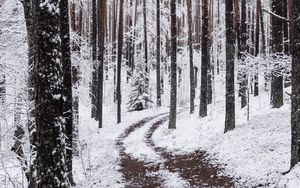 Preview wallpaper snow, winter, path, branches, forest