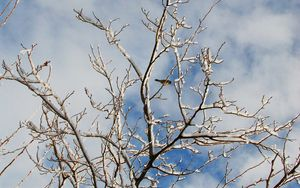 Preview wallpaper snow, winter, tree, branches, birds