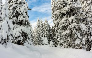 Preview wallpaper snow, winter, trees, forest, sky