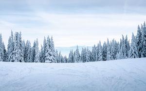 Preview wallpaper snow, winter, trees, winter landscape, snowy