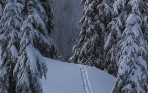 Preview wallpaper snow, winter, trees, forest, path