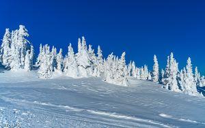Preview wallpaper snow, winter, trees, landscape