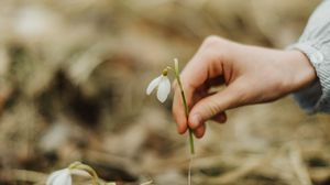 Preview wallpaper snowdrop, spring, hand, flower