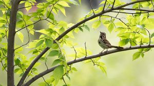 Preview wallpaper sparrow, bird, branch, leaves