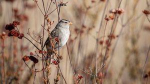 Preview wallpaper sparrow, bird, gray, branch