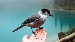 Preview wallpaper sparrow, bird, hand, fog