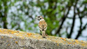 Preview wallpaper sparrow, bird, moss