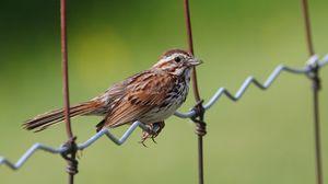 Preview wallpaper sparrow, bird, sitting