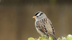 Preview wallpaper sparrow, bird, small, branch, sit