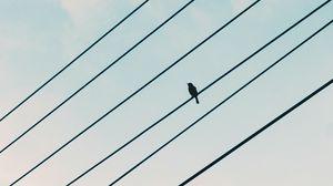Preview wallpaper sparrow, bird, wires, sky
