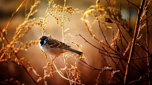 Preview wallpaper sparrow, birds, branches, trees, flowers