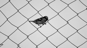Preview wallpaper sparrow, fence, bw, mesh, bird, minimalism