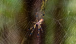 Preview wallpaper spider, insect, cobweb, threads, macro