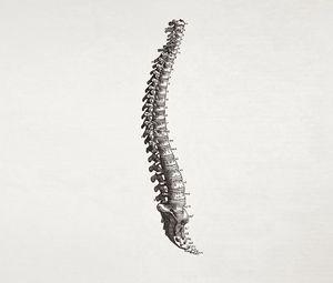 Preview wallpaper spine, bone, figures