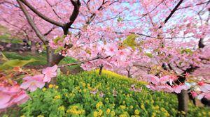 Preview wallpaper spring, bloom, tree, flowers