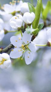 Preview wallpaper spring, branch, apple, flowering
