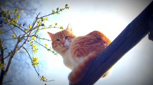 Preview wallpaper spring, cat, animal, nature, morning, sun, mustache