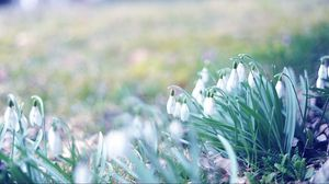 Preview wallpaper spring, snowdrops, grass, light, march