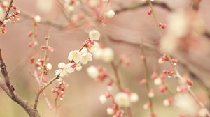 Preview wallpaper spring, tree, blossom, flowers