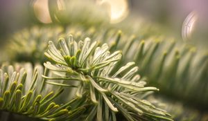 Preview wallpaper spruce, branch, needles, drops, macro, green