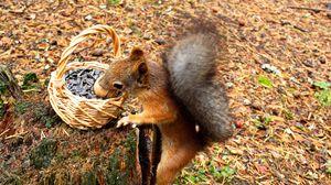 Preview wallpaper squirrel, basket, seeds, stump, food
