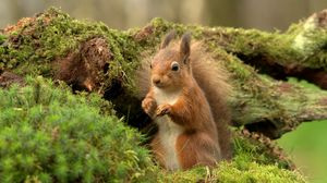 Preview wallpaper squirrel, branches, wood, moss