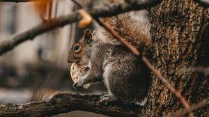 Preview wallpaper squirrel, cookie, tree, branches, beast, wildlife