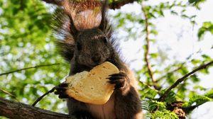 Preview wallpaper squirrel, cookies, food