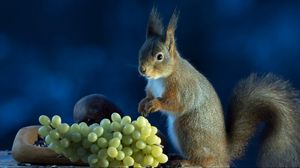 Preview wallpaper squirrel, grapes, food