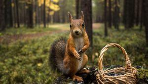 Preview wallpaper squirrel, grass, shopping, summer, greens