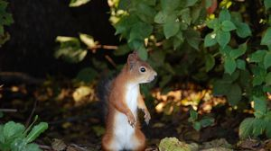 Preview wallpaper squirrel, leaves, fall, stand