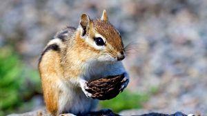 Preview wallpaper squirrel, nut, bokeh, muzzle, paws
